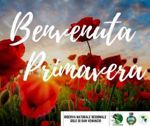 Read more about the article Benvenuta Primavera